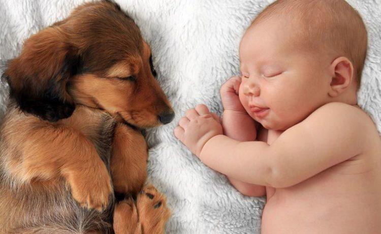 Neonati e animali domestici: 5 regole pratiche per una convivenza pacifica