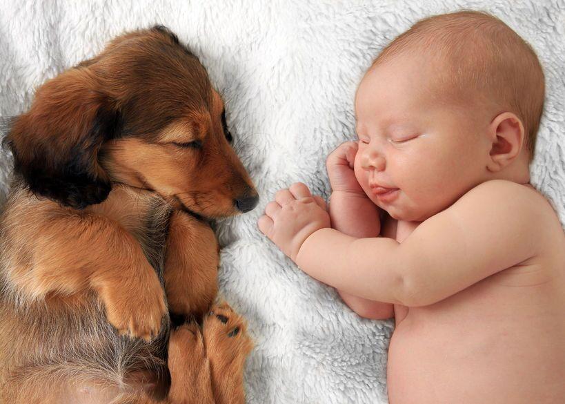 Buongiorno ragazze, oggi vi parlerò di un argomento che mi ha destato non poche preoccupazioni. A casa io ho due splendidi cani, un Labrador dolcissimo e un terremoto di bassotto. Entrambi cani mansueti ma non avevo la minima idea di come si comportassero con un neonato. In realtà un'idea me l'ero fatta ma vi anticipo […]